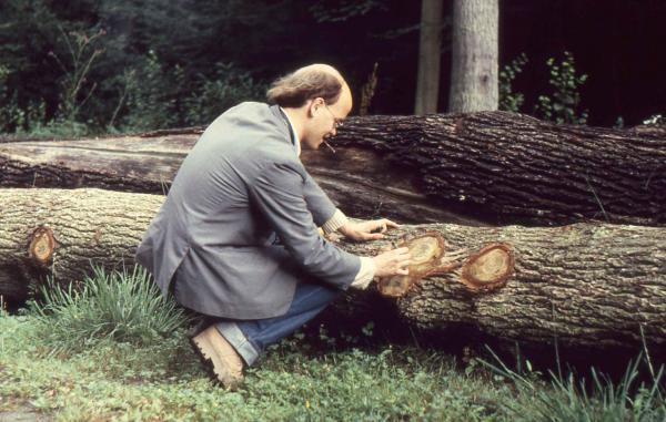Dessin sur tronc au Désert de Retz, 1981