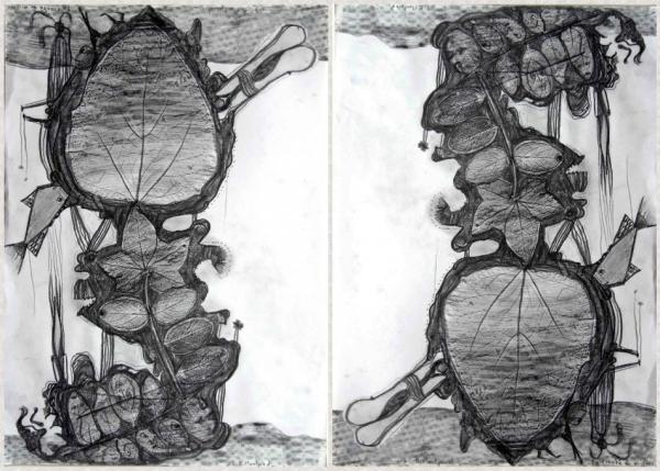 La plante à miroir, dessin à double lecture, 2003